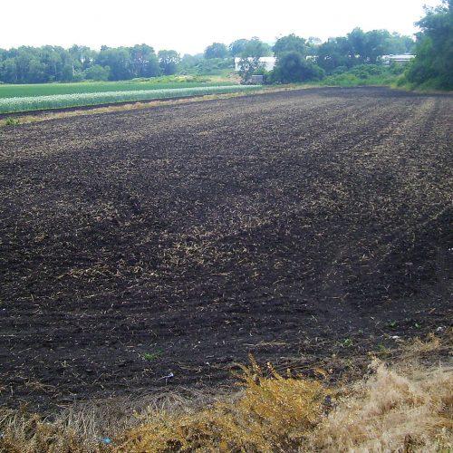 black_dirt_in_black_dirt_region